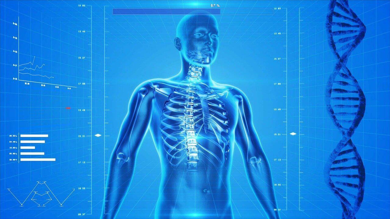 digital image of human skeleton